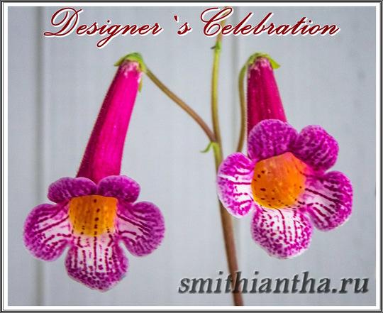 Смитианта Designer`s Celebration